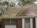 Tampa Roof Cleaning 001.jpg